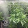 10292014 i502 cannabis cultivation #3