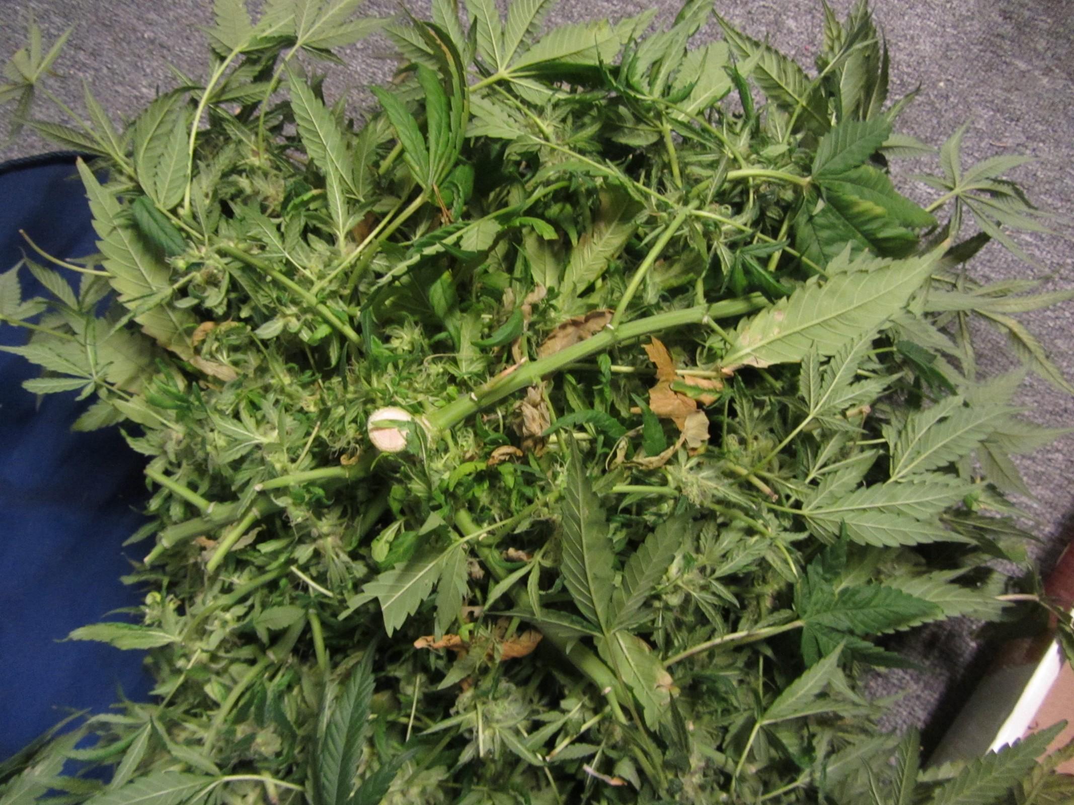 Week 9 Harvest